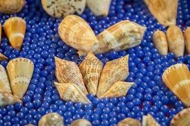 Image Of Seashell Collection Many Different Shells