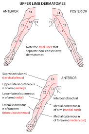 Instant Anatomy Diagram