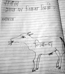 write essay on cow student rocks picdesi com write essay on cow student rocks funny