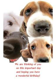 hello this is dog happy birthday. dog birthday cards facebook | happy card with dogs hello this is 0