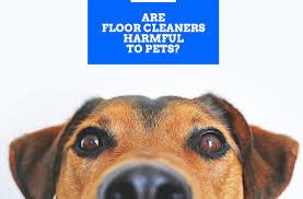 pet friendly floor cleaner