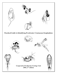 Invertebrate Identification Chart Pdf Practical Guide To Identifying Freshwater Crustacean