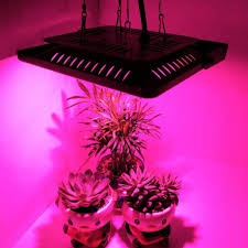 House Plant Led Grow Light Led Grow Light Full Spectrum 100 200w Plant Lamp Cob Waterproof Ip67 For Indoor Flower Houseplant Greenhouse Growing Phyto Lamp