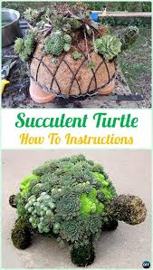 Small Picture 7 best Garden ideas images on Pinterest Succulent garden ideas