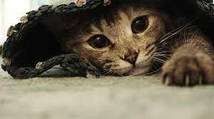 Cats Desktop Wallpapers - Top Free Cats ...