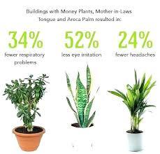 office plants low light good the best indoor plants for low light for best indoor plants