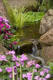 small plants for small ponds about