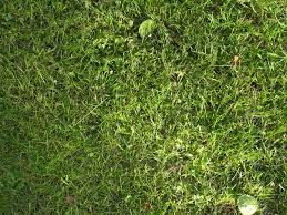 grass texture hd. Texture: Grass 1 By Namenotrequired Texture Hd