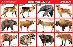 Spectrum Educational Charts Chart 501 Animals 3