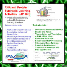A rna sequence that is complementary to the mrna of a particular gene will prevent the translation of that gene into a protein by binding to the examples are : Rna And Protein Synthesis Learning Activities For Ap Biology Distance Learning Amped Up Learning