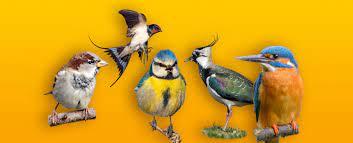 Seit 1980 sind fast 90 prozent ihrer. Deutschland Wahlt Den Vogel Des Jahres 2021