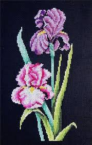Iris Floss Color Chart Iris On Black Counted Cross Stitch Kit