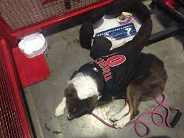 How To Take Your Dog To The Ball Game The Crafty Chica
