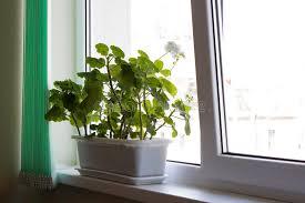 office flower pots. Download Office Flower Pot Stock Image. Image Of White, Floriculture - 24177615 Pots T