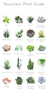 office table feng shui.  Shui Office Desk Best Plants For Stupendous Small  Plant Feng Shui And Table