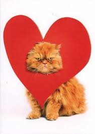 valentine cat images. Fine Cat Happy Valentineu0027s Day With Valentine Cat Images R