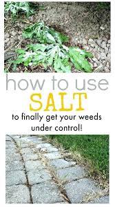 vegetable garden weed control raised vegetable garden weed control tips