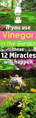 Uses Of Kitchen Garden If You Use Vinegar In The Garden These 12 Miracles Will Happen
