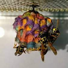 Image result for wasp