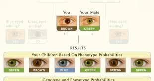 Eye Color Probability Chart Real Eye Color Chart Eye Color Chart Eye Color Predictor