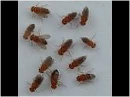 Download Small Flies In Bathroom  Gen4congresscomSmall Flies Around Kitchen Sink