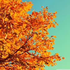 14++ Autumn Wallpaper For Ipad Mini ...