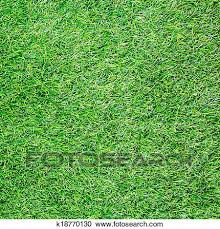 grass field texture. Stock Photography - Artificial Grass Field Top View Texture . Fotosearch Search Photos, L