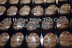 for your dog including some that are perfectly healthy for humans we ll need to remember this the next time we want to feed our dogs some breakfast
