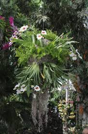 the central chandelier holds 500 plants including luminous white phalaenopsis and electric yellow oncidium tucked among lush fernoss