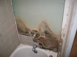 bathroom tile mold. How To Remove Mold And Detect It\u0027s Early Signs - KUKUN Bathroom Tile N