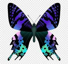 Black, blue, green, and pink butterfly ...