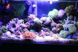 nano reef led lighting the insatiable edge my central community schedule best