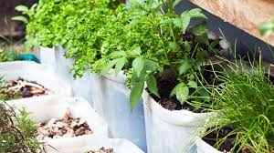 various herbs in pots including ply rosemary and chives