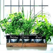 herb window box herb window box indoor garden sill planter full image for kitchen best plants herb window