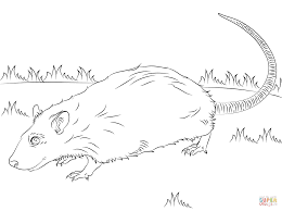 Small Picture Cute Rat coloring page Free Printable Coloring Pages