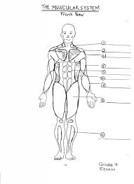 Anatomy Coloring Pages Muscles Free Ayushseminarmahainfo