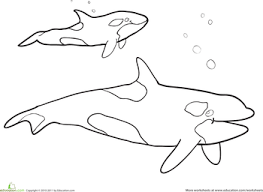 Small Picture Killer Whale Coloring Page Killer whales Worksheets and Colour book