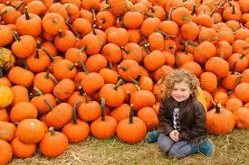 pumpkin picking corn maze hay ride new jumbo jumper air pillow pig racing pony rides cow train ride face painting photo