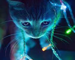 3D Cute Cat Live Wallpaper Themes for ...