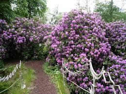Small Picture Garden Design Garden Design with Kateus garden in New Jersey Day
