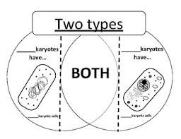Venn Diagram Prokaryotes Vs Eukaryotes Worksheets Teaching