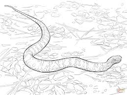Small Picture Viper Snake Coloring Pages Coloring Coloring Pages