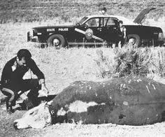"Image result for Christopher O'Brien, an Arizona based author of ""Stalking the Herd: Unraveling the Cattle Mutilation Mystery"""