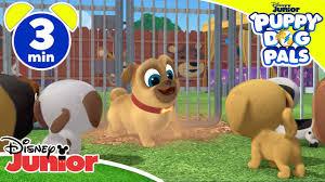 Những người bạn của cún con | Tìm kiếm chú chó con - Disney Junior Italy - Phim  hoạt hình Trực tuyến