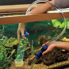 Image result for scheduled maintenance for the fish tank