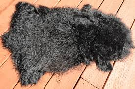 genuine tibetan mongolian lamb fur pelt black contemporary novelty rugs by curly fur imports