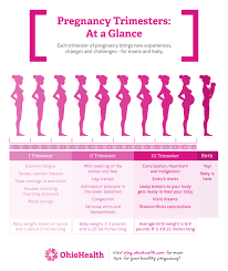 Stages Of Pregnancy By Trimester Ohiohealth