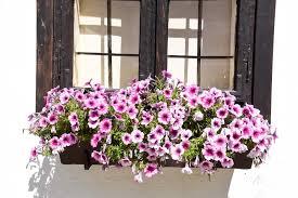 The site owner hides the web page description. 5 Cascading Plants Flowers For Window Boxes