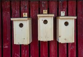make birdhouses pugh s garden centres