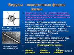 Вирусы неклеточная форма жизни Биология Реферат доклад  Эссе по биологии на тему вирусы